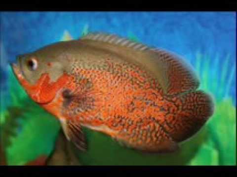 Reef Aquarium & The Best Relax Music