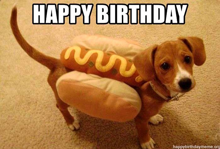 Insane Hilarious Dog Memes Dog Meme Ugliest Happy Birthday Funny Dog Happy Birthday Dog Meme Dog Memes