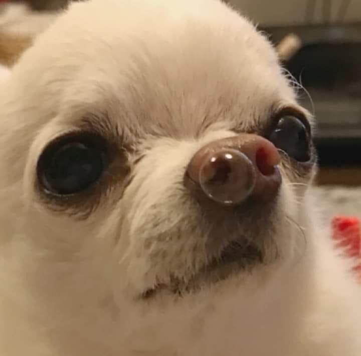 Bubble Moco Memes Perros Memes Divertidos Perros Y Gatos Graciosos