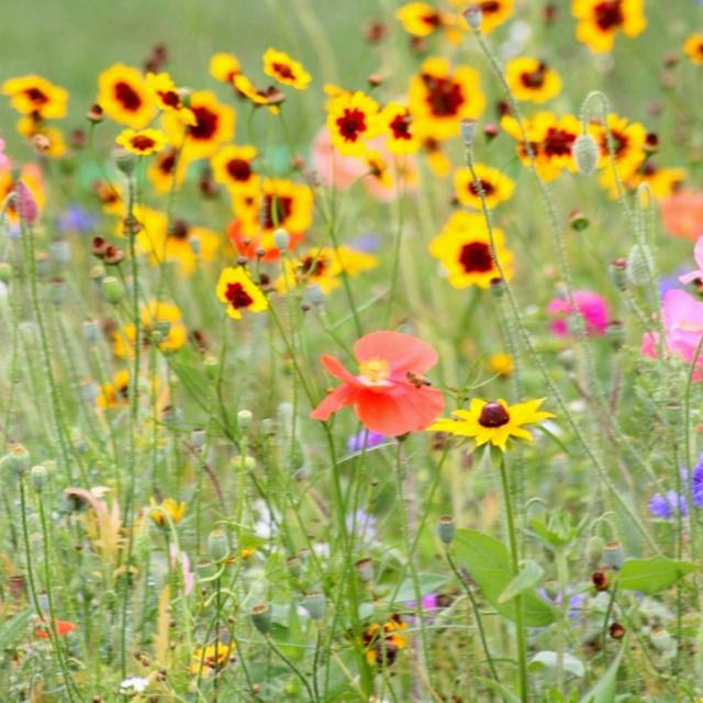 Garden Ideas Michigan 43 best public gardens in michigan images on pinterest | public