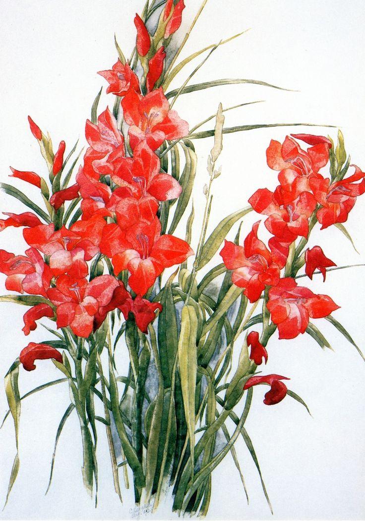 Charles Demuth (American, 1883-1935) - Gladiolus (1928)