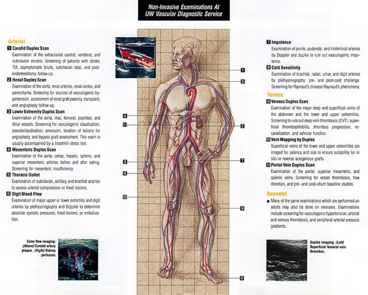 anatomy for diagnostic imaging pdf