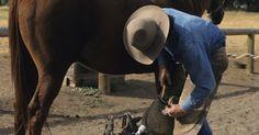 Carreras que involucran tratar con caballos. Si tu intención es trabajar con caballos, existen muchas opciones de carreras disponibles. Algunas, como la veterinaria, involucran muchos años de estudio y reconocimientos; otras, como convertirse en mozo de caballos, requieren de menos preparación. Para trabajar con caballos, en la mayoría de las ocasiones, necesitarás contar con buen ...