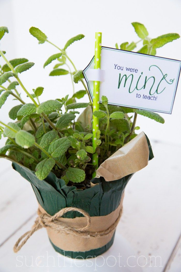 "Teacher Gift - Printable Herb Labels. Add on one of these pun-tastic printables like ""you were mint to teach"" and you've got a fun way to send off your favorite teacher to have a great ""thyme"" over the summer. Perfect for Teacher Appreciation or an End-of-Year Gift. Visit whatmomslove.com to see our entire round-up of awesome teacher printables. @suchdarcie Check out our entire round-up of awesome teacher printables at whatmomslove.com."