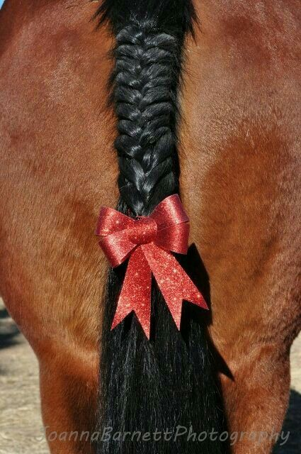 Entangled tail and red bows