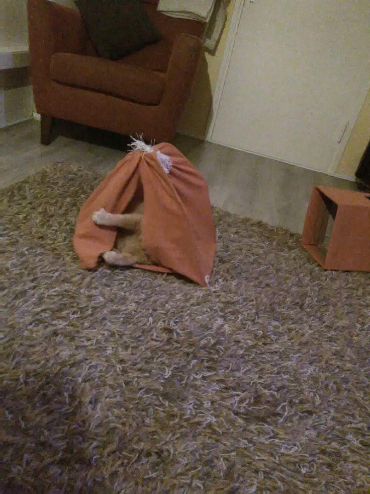 Kissan teltta
