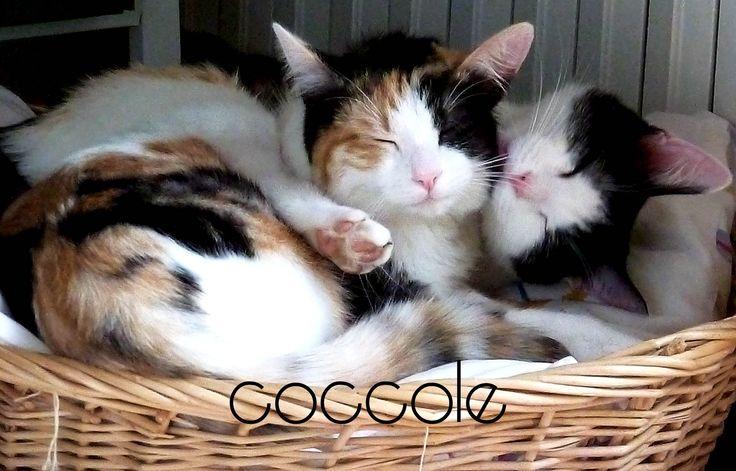 love.. cat.. coccole e amore
