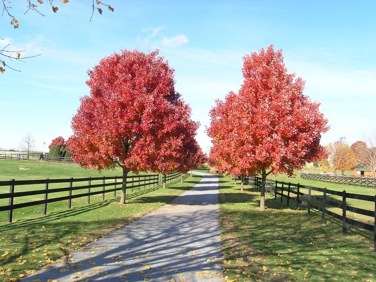 Intercourse, PA - Southern Lancaster County - November, 2007