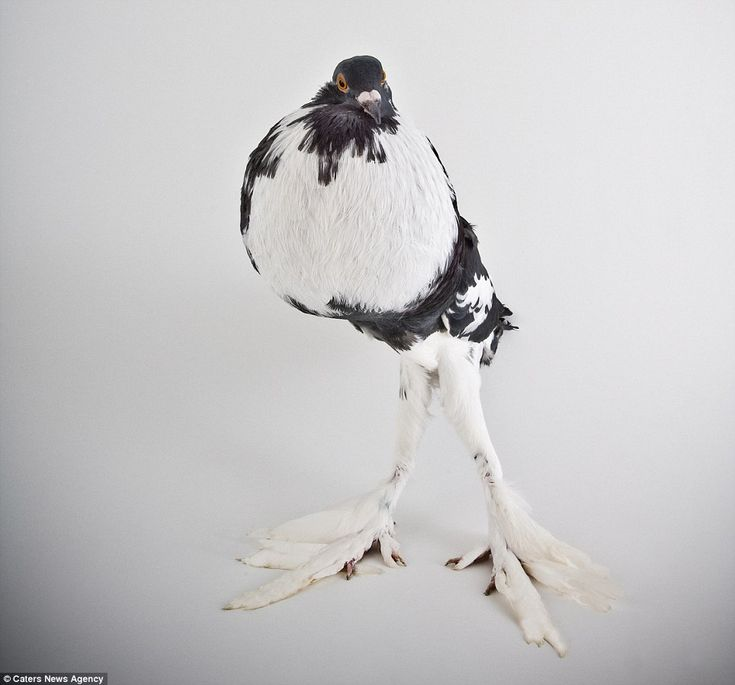 Here are some pigeons modelling, just because http://dailym.ai/1kdkEWF #DailyMail