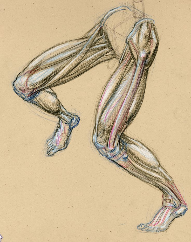 167 Best Figure Leg Anatomy Bone And Muscle Images On Pinterest