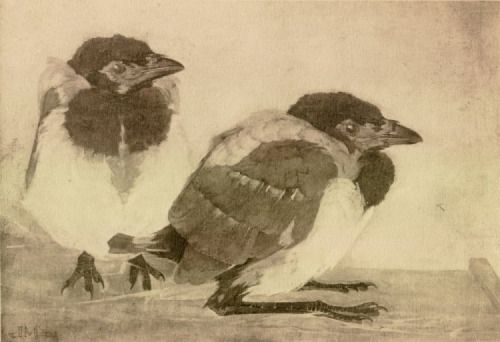 JAN MANKES Two young magpies [1909]