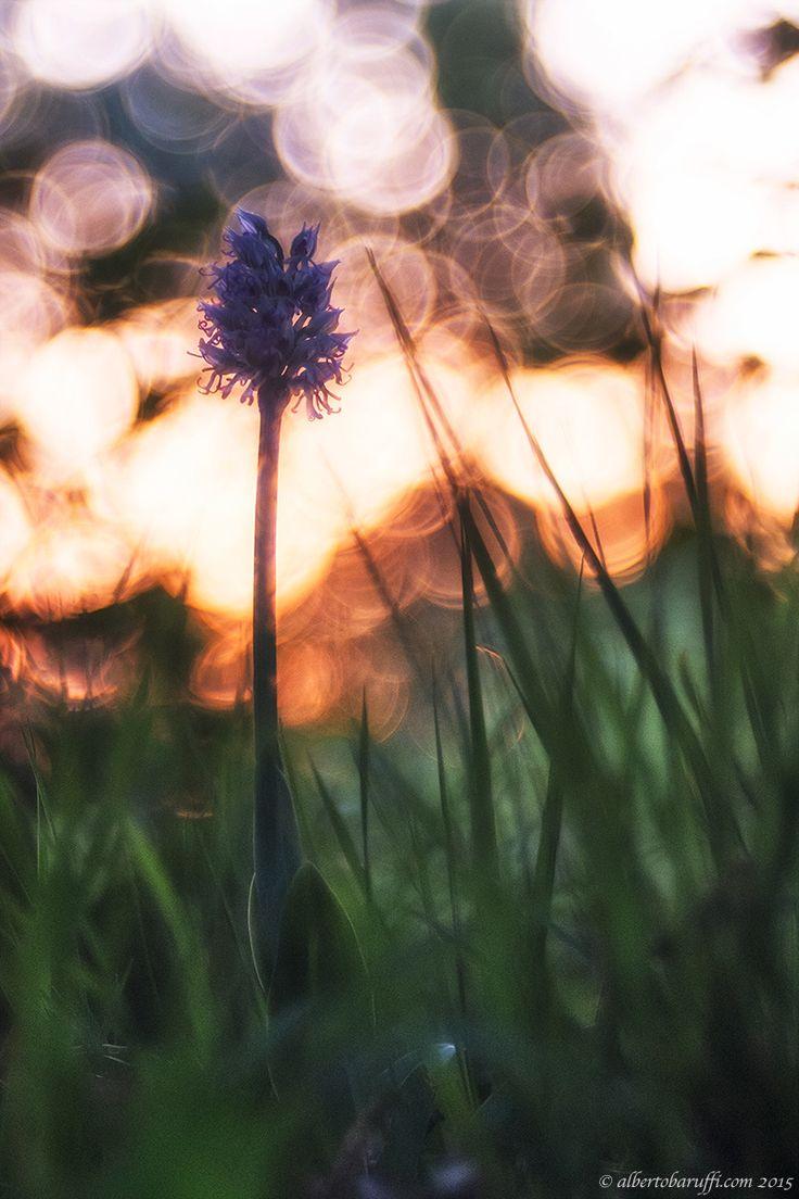 Sunset by Alberto Baruffi on 500px