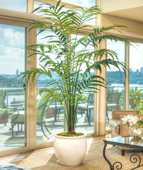 Double Kentia Artificial Palm  https://www.facebook.com/SilkFlowers.comCouponCode