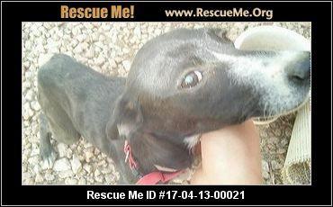 ― Arizona Lab Rescue ― ADOPTIONS ―RescueMe.Org