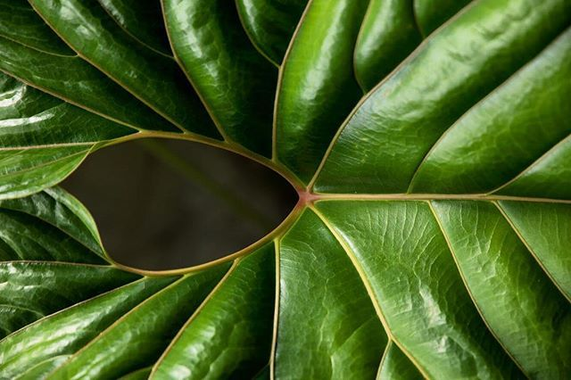 Love for nature textures . #nature #naturetexture #naturephotography #naturelovers #leaf #texture #texturephotography #green #greenphoto #life #natureart #artinnature