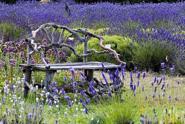 Great Bench...and picture
