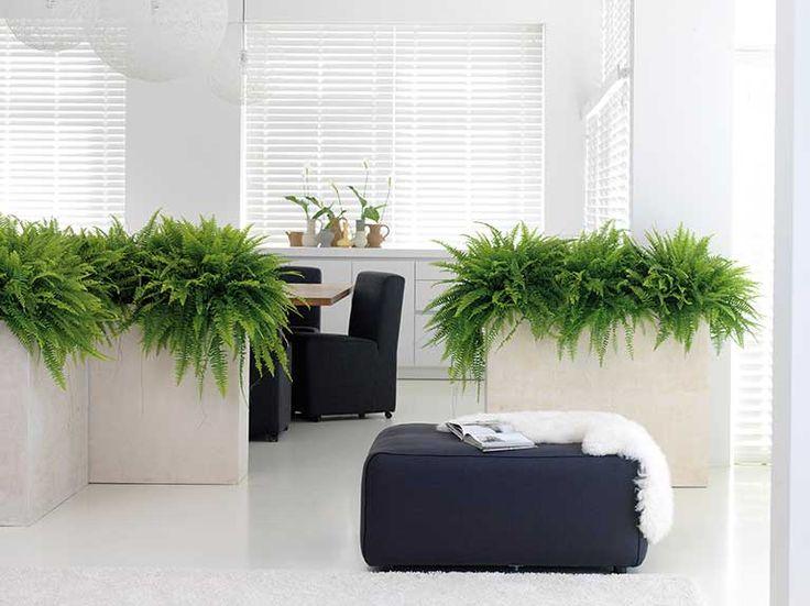 Pflanzen-Luftbefeuchter im Raum