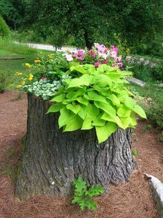 Turn a lopped-off tree into the highlight of your yard by filling it with colorful flowers