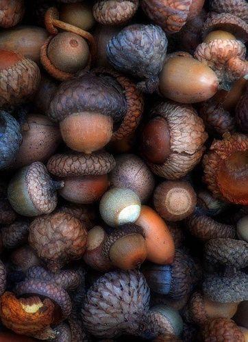 Brown | Buraun | Braun | Marrone | Brun | Marrón | Bruin | ブラウン | Colour | Texture | Pattern | Style | Acorns
