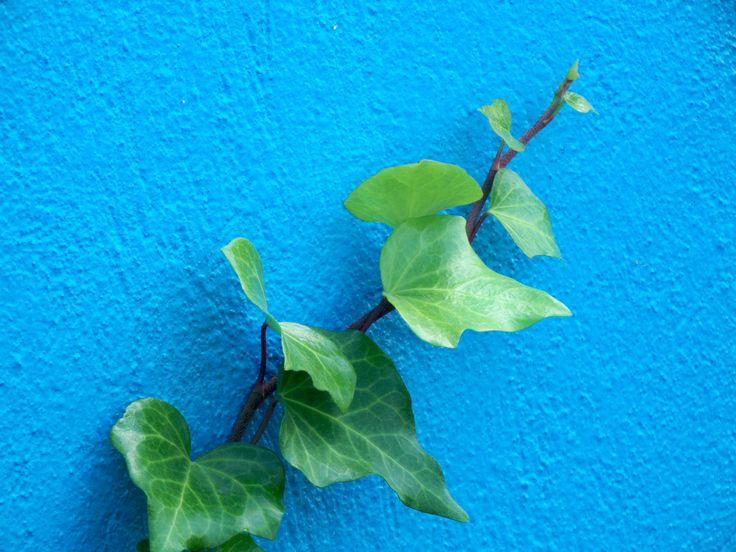 Nie zawsze zdajemy sobie sprawę z tego jak dobroczynny wpływ mają na nas popularne kwiaty doniczkowe. Poznajcie naszych zielonych, domowych sprzymierzeńcóów w walce ze smogiem i brudnym powietrzem.  🌴🌱🌿☘🌷 #smog #kwiatydomowe #oczyszczaniepowietrza http://greenwitch.pl/smog/