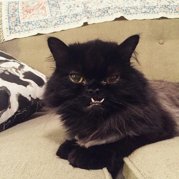 Just wanted everyone to know there is a cat called Princess Monster Truck you may continue. http://ift.tt/2dfOn8x