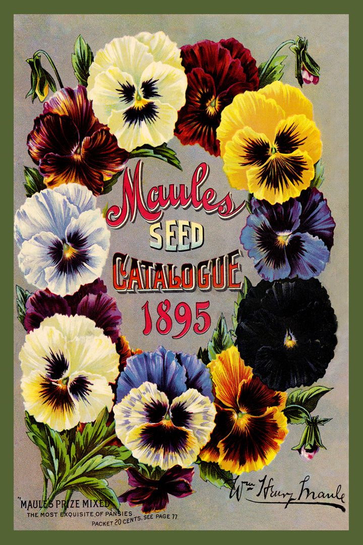 Maules Seed Catalog cover 1895 in a set of 4-4x6 pansy quilt blocks produced by American Quilt Blocks. Ferry Seed Packet 1889 in a set of 4-4x6 quilt blocks by American Quilt Blocks. Vintage image printed on cotton. Ready to sew.  Single 4x6 block $4.95. Set of 4 blocks with pattern $17.95.