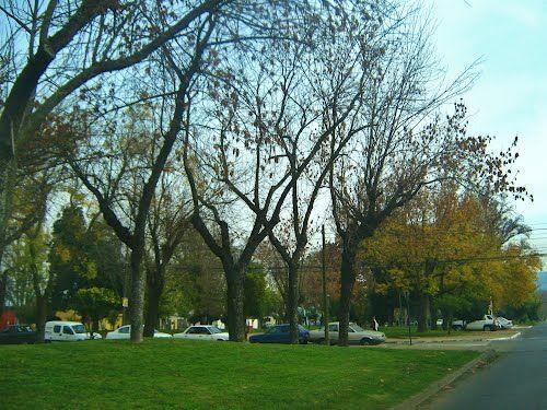 Panoramio - Photos by Pamela Macchiavello > Alameda Talca