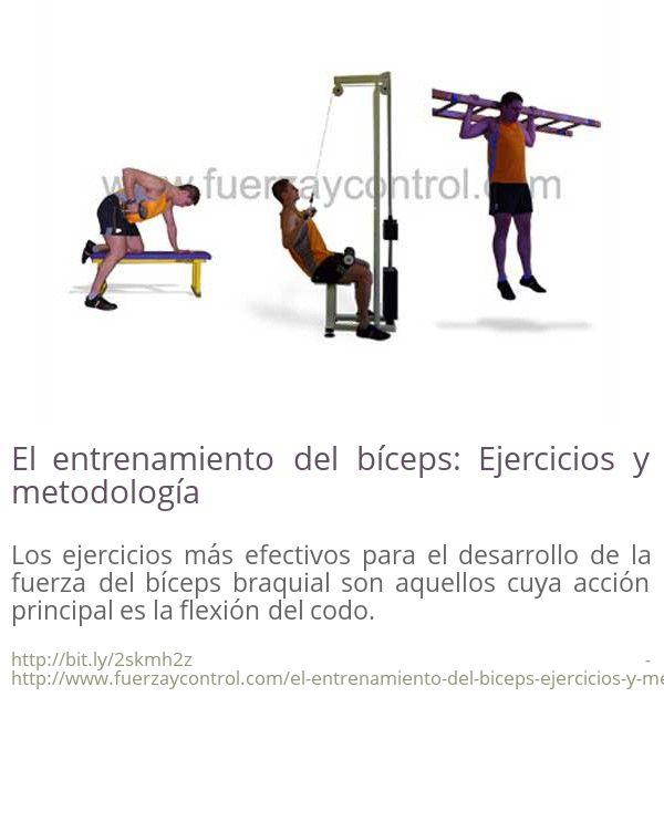 El entrenamiento del bíceps: Ejercicios y metodología Los ejercicios más efectivos para el desarrollo de la fuerza del bíceps braquial son aquellos cuya acción principal es la flexión del codo.
