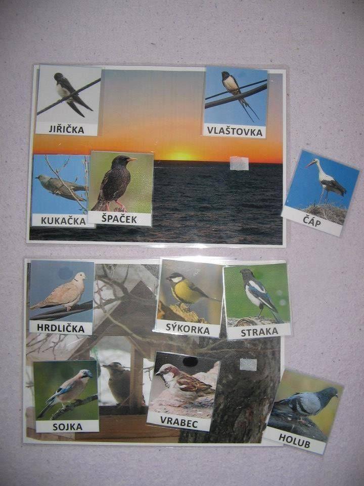 Ptáci, kteří zůstávají na zimu a kteří odlétají