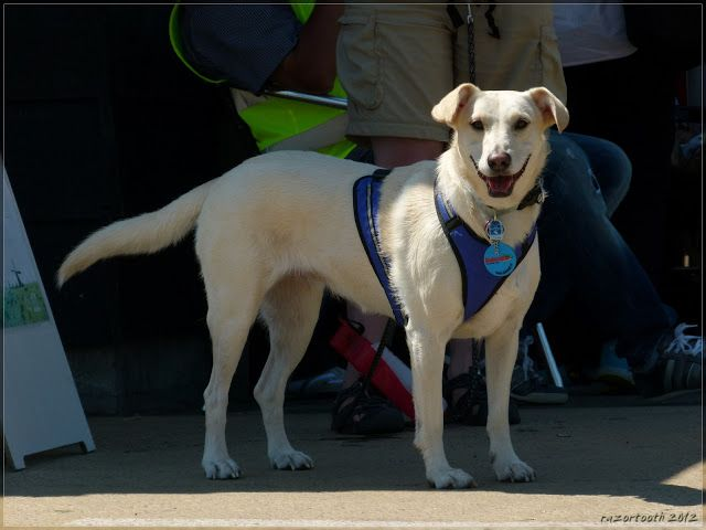 Labrador-Erdelyi Kopo(Hungarian Hound)-Mudi mix | Mischlings-Foto-Domino - Page 42 - Sonstiger Talk rund um den Hund - DogForum.de das große Hundeforum