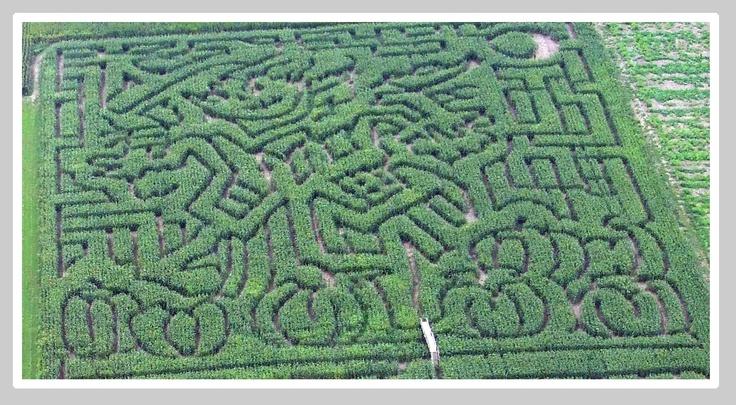 corn maze.