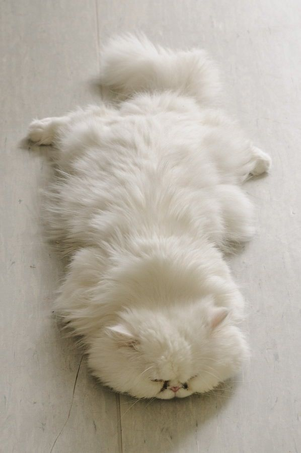 cat or carpet?