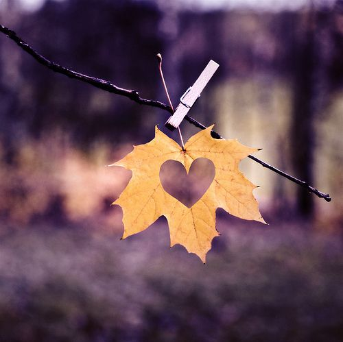 A heart cut-out in an autumn leaf - what a lovely idea for someone you love who may be celebrating something special during the season...