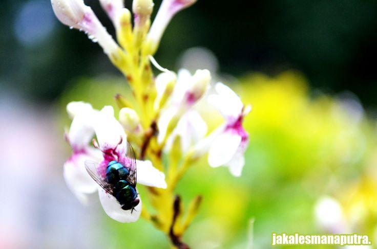 bunga di lalat atau lalat di bunga *whatever