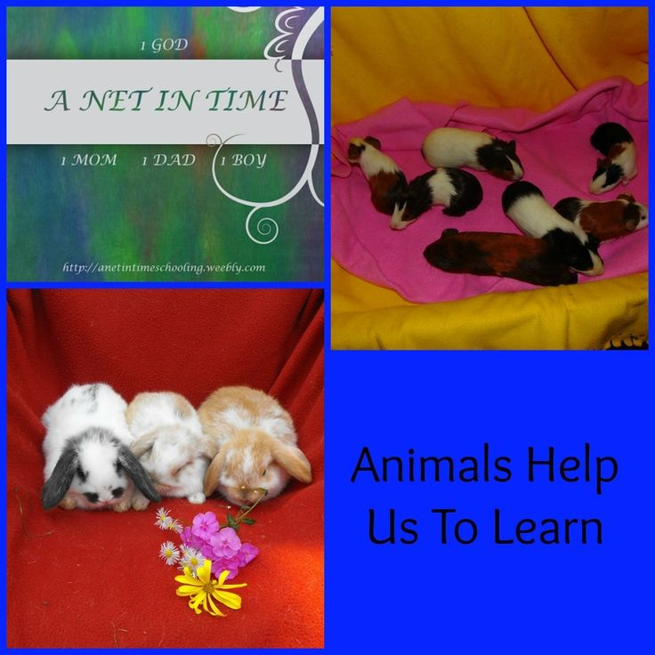 Animals help us learn. In so many different ways.  Free printable included on how to care for pet rabbits!   By A net in time.