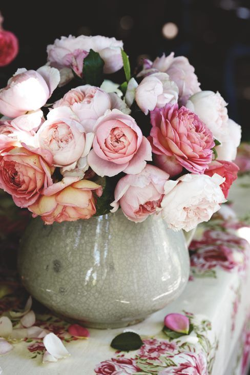 a mix of David Austin Roses from Kentucky Roses