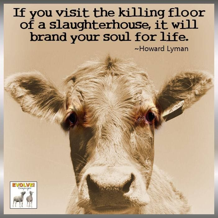 If you visit the killing floor of a slaughterhouse, it will brand your soul for life #vegan
