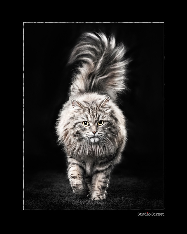 Portrait Photographer of the Year 2013 3rd at Animal Portrait category - Catwalk