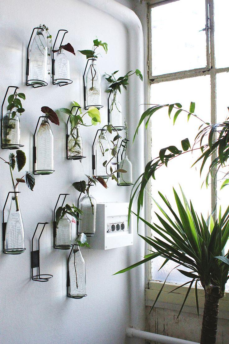 Plants hangers