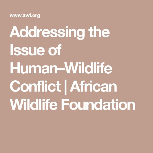 Addressing the Issue of Human–Wildlife Conflict   African Wildlife Foundation
