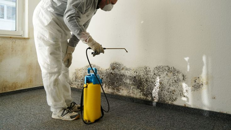 Does homeowners insurance cover mold combat this