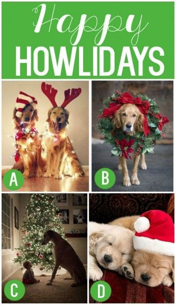 101 Creative Christmas Card Ideas! Even make cards from your pets! (Click Photo) / You can Add Santa to Your photos. Try it out for Free at Capturethemagic.com #DogChristmas