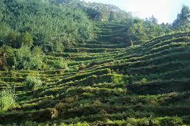Dataran tinggi (disebut juga plateau atau plato) adalah dataran yang terletak pada ketinggian di atas 700 m dpl.[rujukan?] Dataran tinggi terbentuk sebagai hasil erosi dan sedimentasi.
