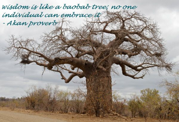 34 Facts about Baobab Trees