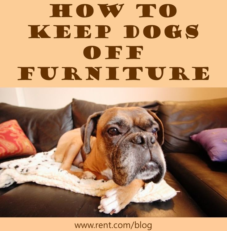 How To Keep Dogs Off Furniture Furniture On And Wells