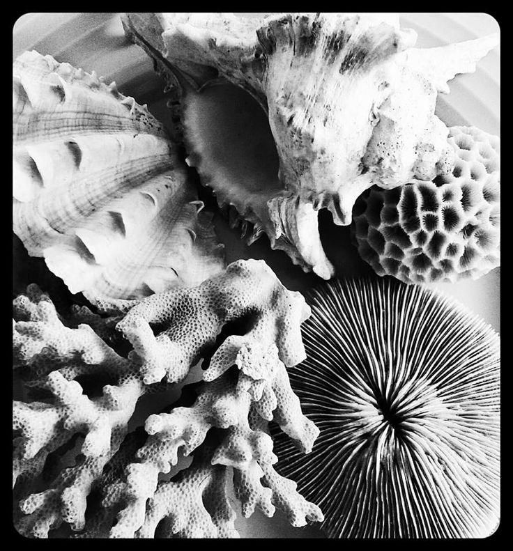 'Still life with shells'  inspired by Ed Weston.