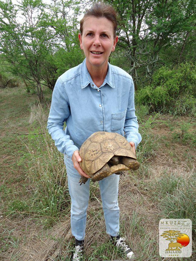 Tortoises at Mkuze