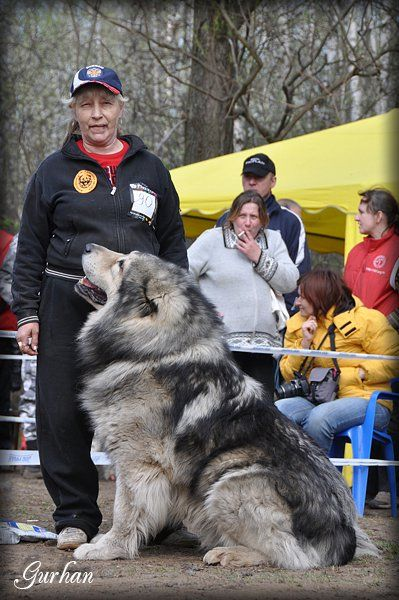 Caucasian Ovcharka, the Russian Bear Dog http://www.russiandog.net/caucasian-dog.html