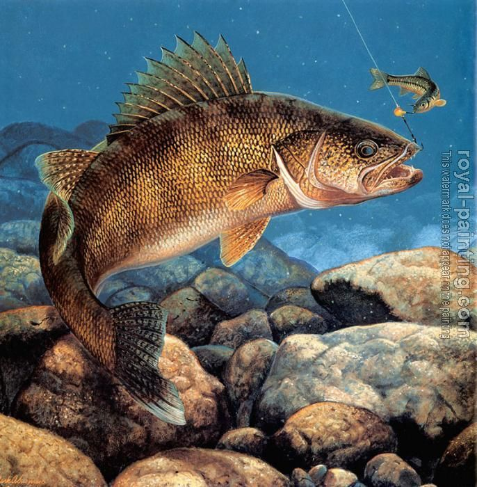 Walleye Pictures Stinger Hooked Walleye By Mark Susinno Fish Painting Fish Drawings Walleye Fishing