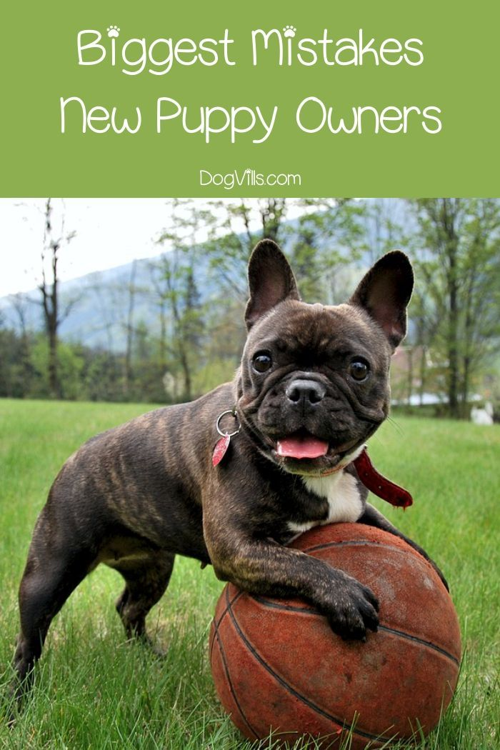 12 Sweet Country Dog Names For Your New Pup New Puppy French Bulldog Funny Puppies